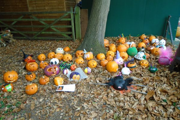 Pumpkin Parade 5