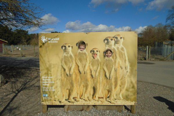 Marwell Zoo 2