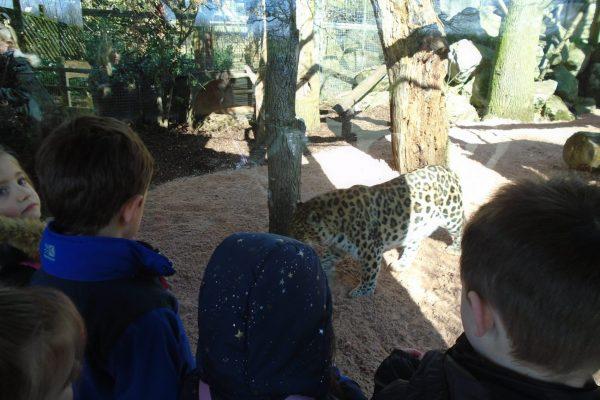 Marwell Zoo 3