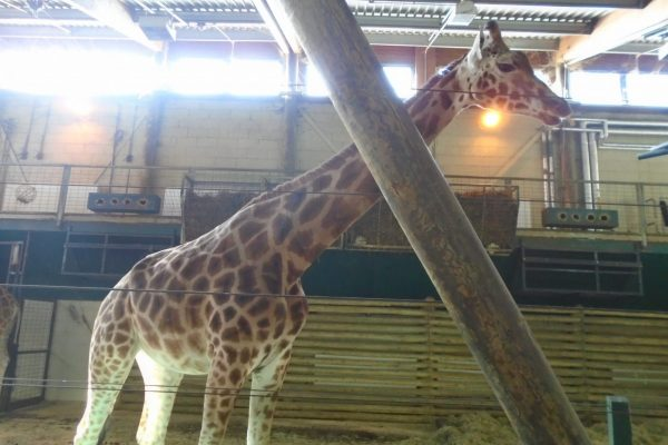 Marwell Zoo 4
