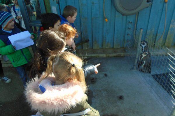 Marwell Zoo 5