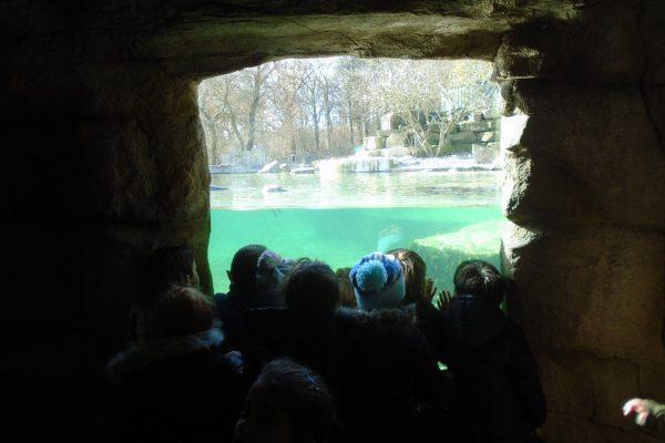 Marwell Zoo 6