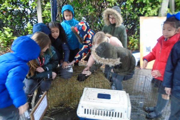 Year 2 Farm Animals 1