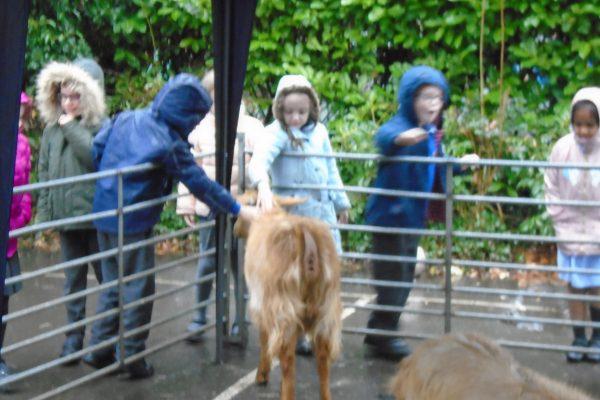 Year 2 Farm Animals 3