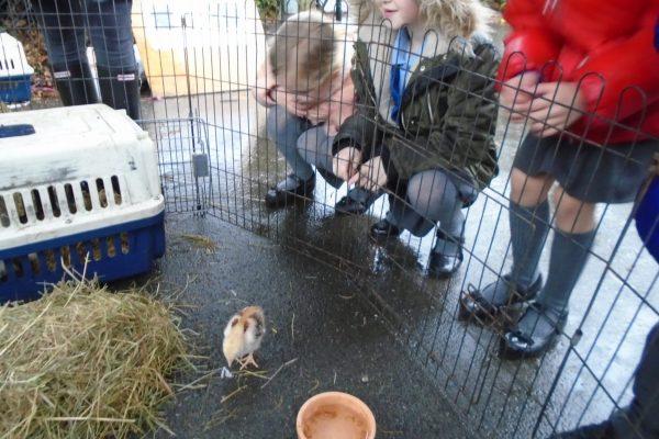 Year 2 Farm Animals 6