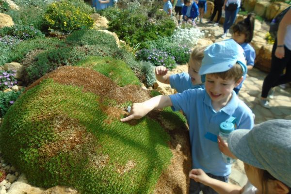 Year 1 Trip to Wisley 4