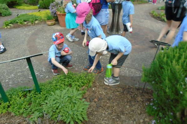 Year 1 Trip to Wisley 5